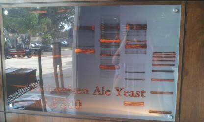Yeast DNA
